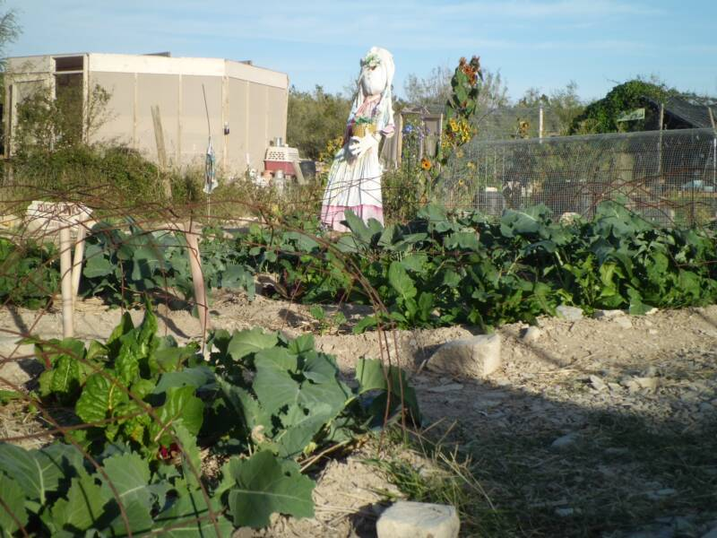 A smiling scarecrow watches over our desert garden.